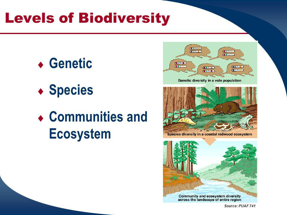 Levels of Biodiversity