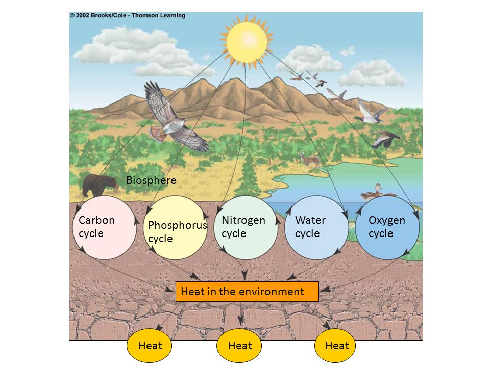 Biosphere Carbon. cycle. Nitrogen. cycle. Water. cycle. Oxygen. cycle. Phosphorus. cycle. Heat in the environment.