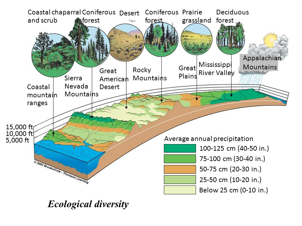 Ecological diversity Coastal chaparral and scrub Coniferous forest