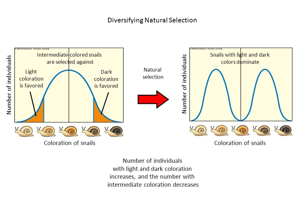 Diversifying Natural Selection