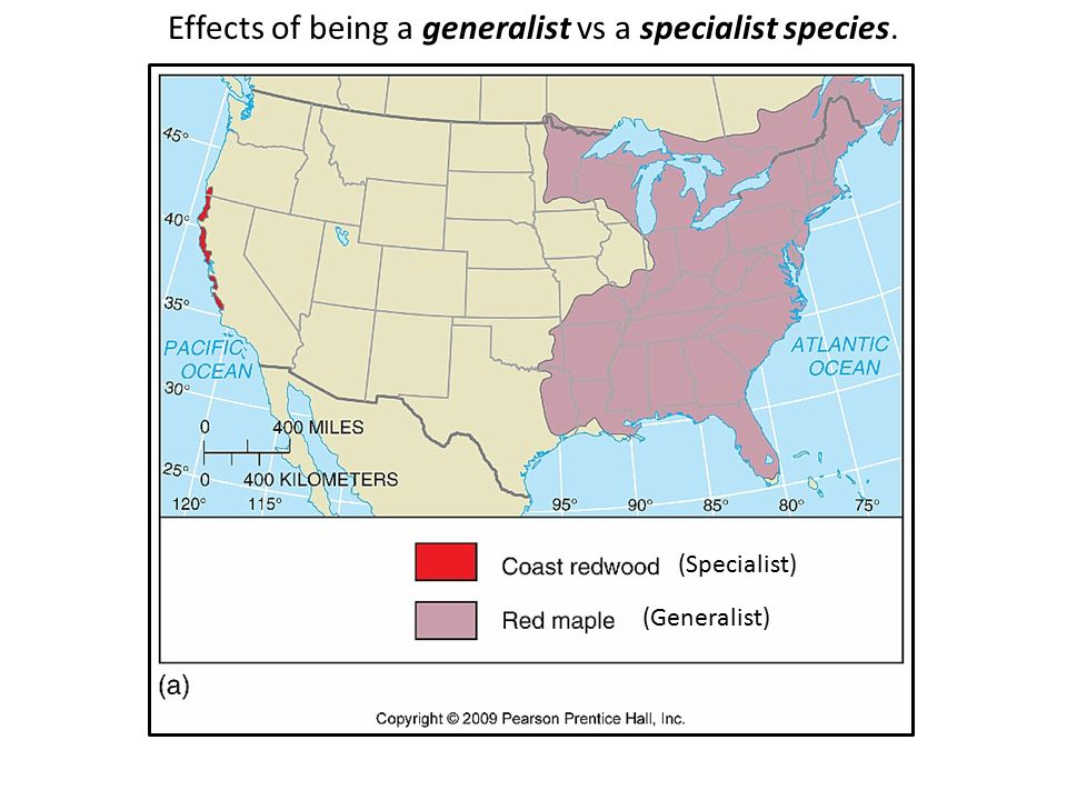 Effects of being a generalist vs a specialist species.
