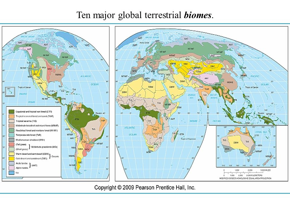 Ten major global terrestrial biomes.