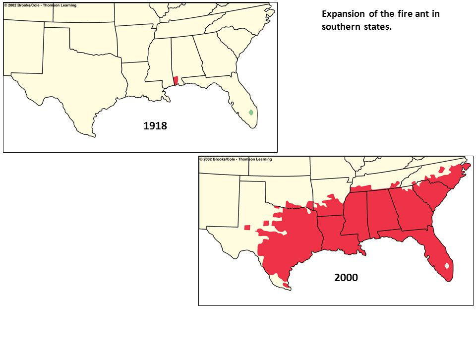 1918 Expansion of the fire ant in southern states. 2000