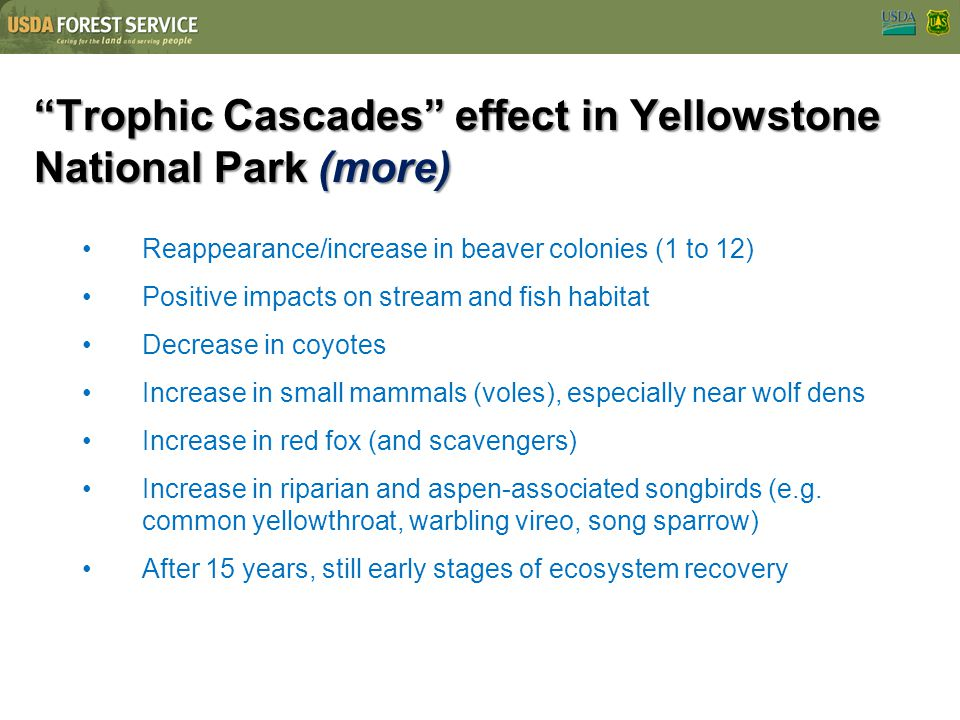 Trophic Cascades effect in Yellowstone National Park (more)