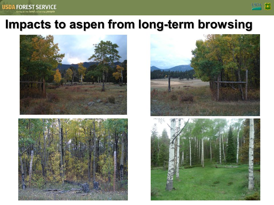 Impacts to aspen from long-term browsing