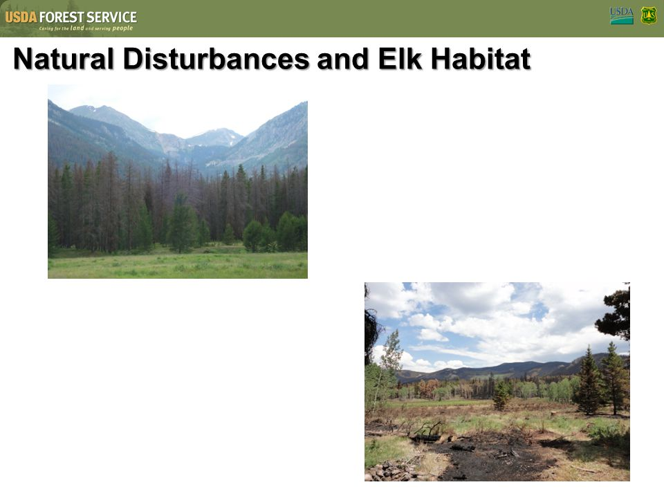 Natural Disturbances and Elk Habitat