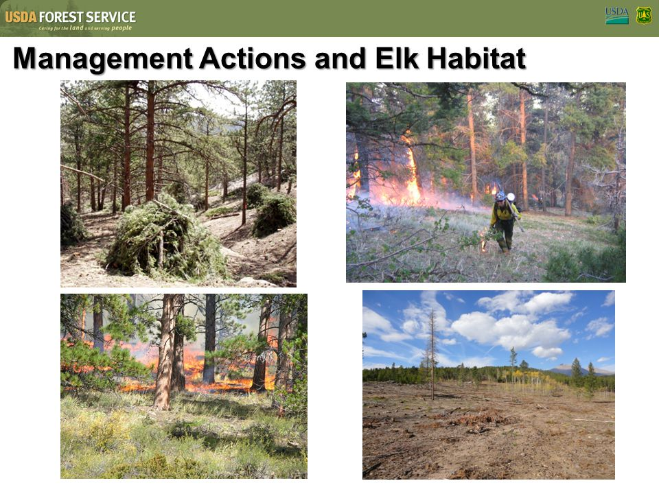 Management Actions and Elk Habitat