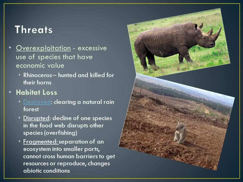 Threats Overexploitation - excessive use of species that have economic value. Rhinoceros – hunted and killed for their horns.