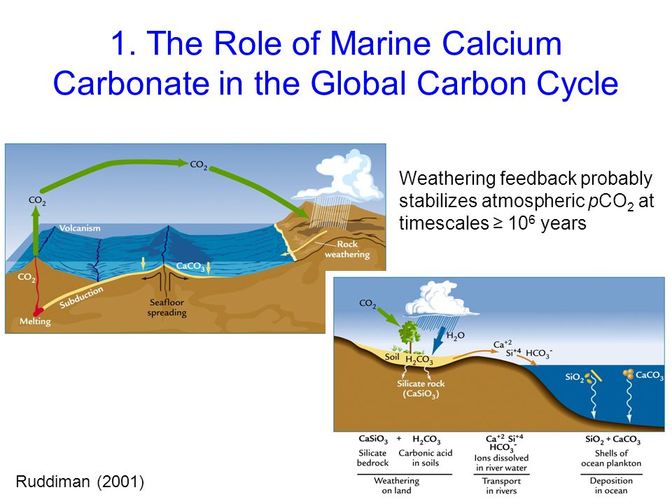 1. The Role of Marine Calcium Carbonate in the Global Carbon Cycle