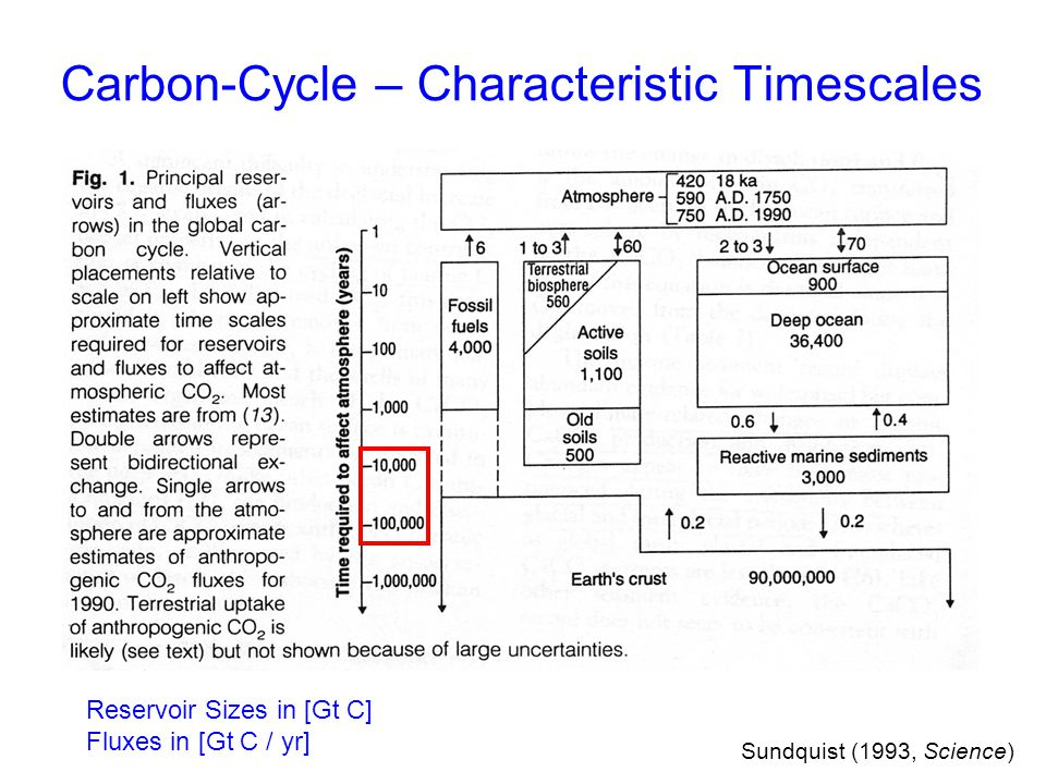 Carbon-Cycle – Characteristic Timescales
