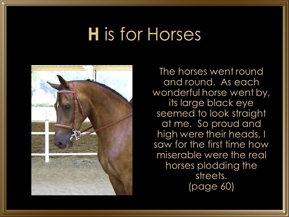 H is for Horses