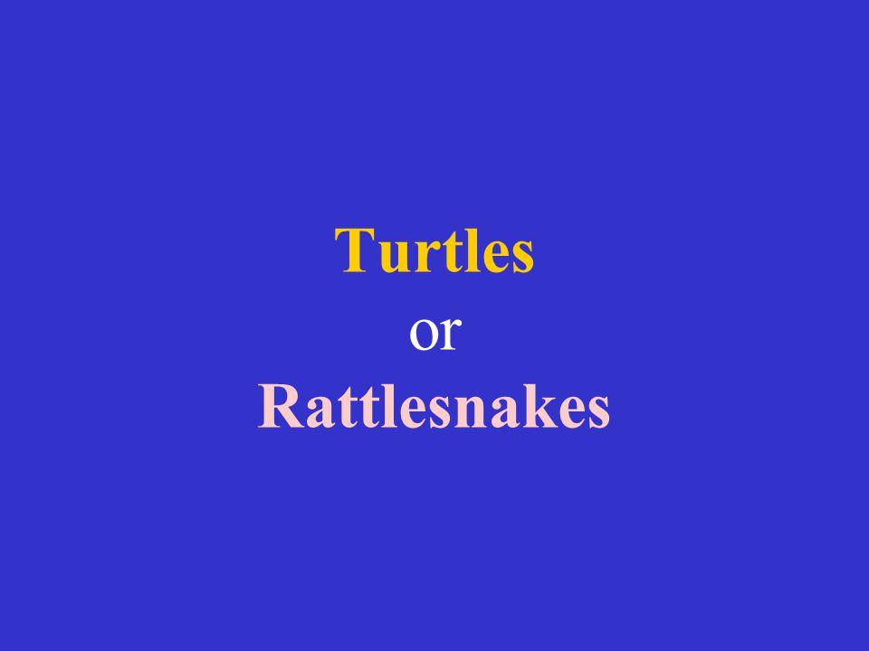 Turtles or Rattlesnakes