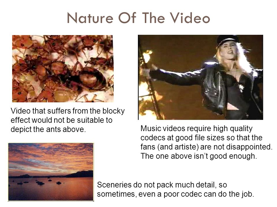 Nature Of The Video Video that suffers from the blocky effect would not be suitable to depict the ants above.