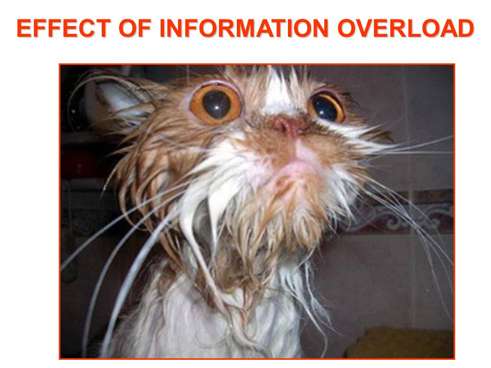 EFFECT OF INFORMATION OVERLOAD