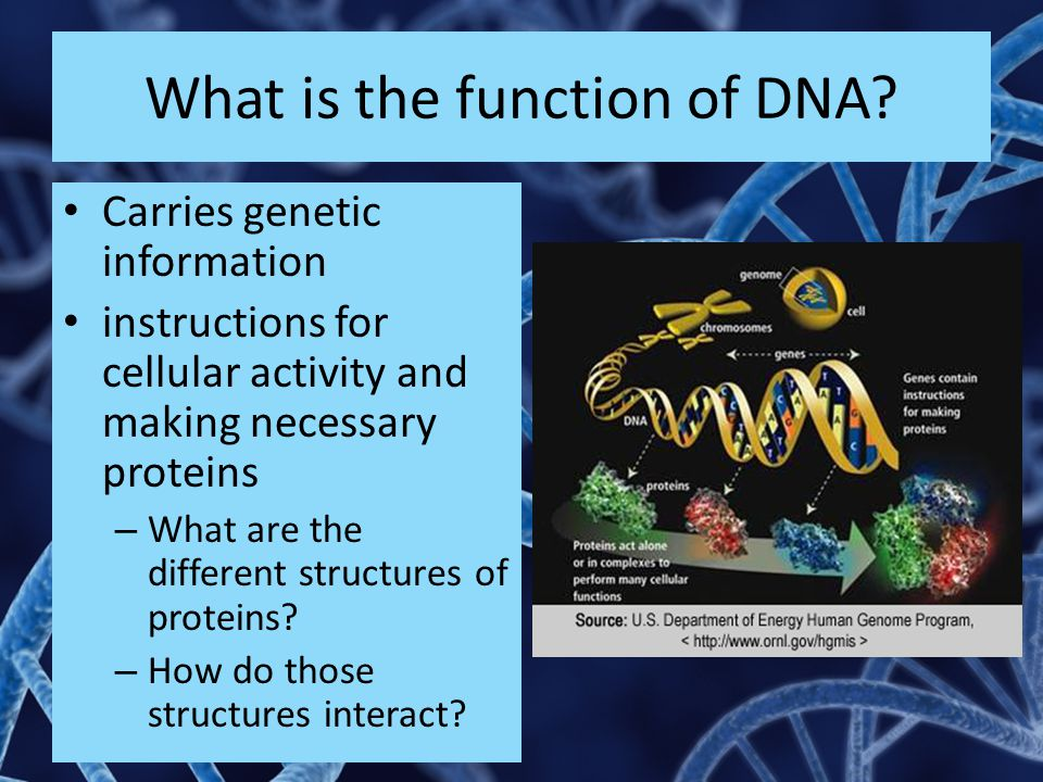 What is the function of DNA