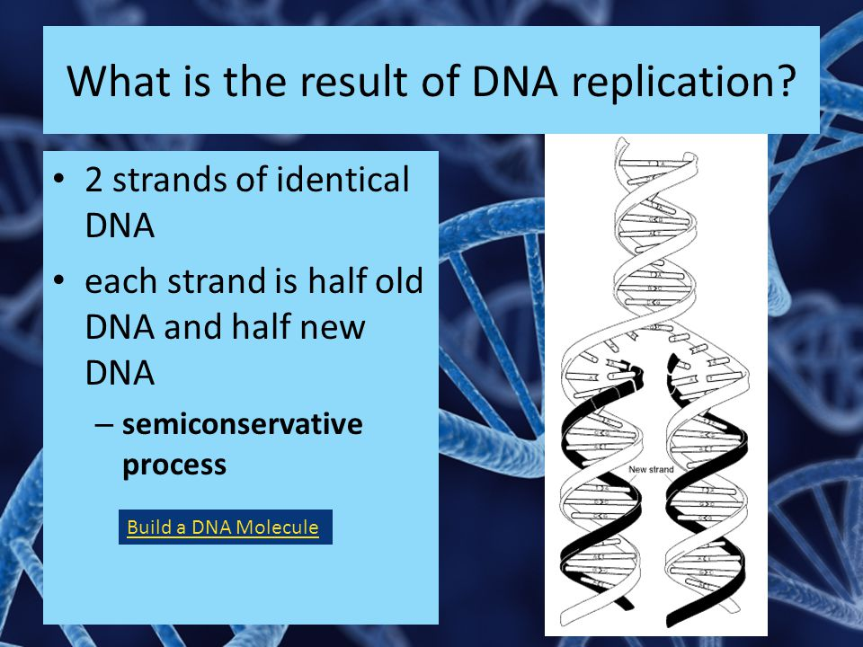 What is the result of DNA replication