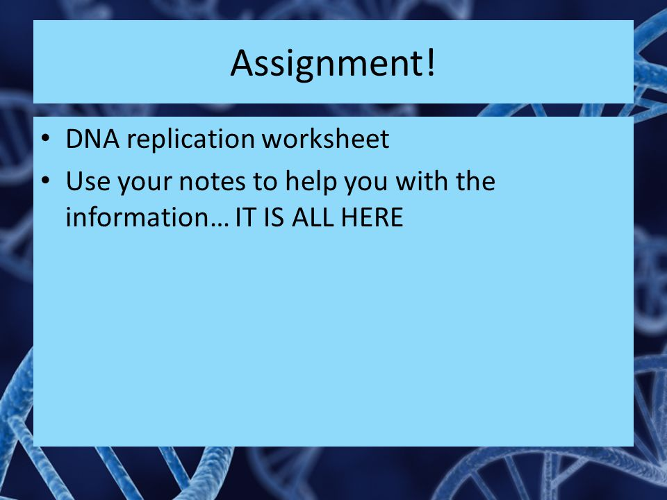 Assignment! DNA replication worksheet