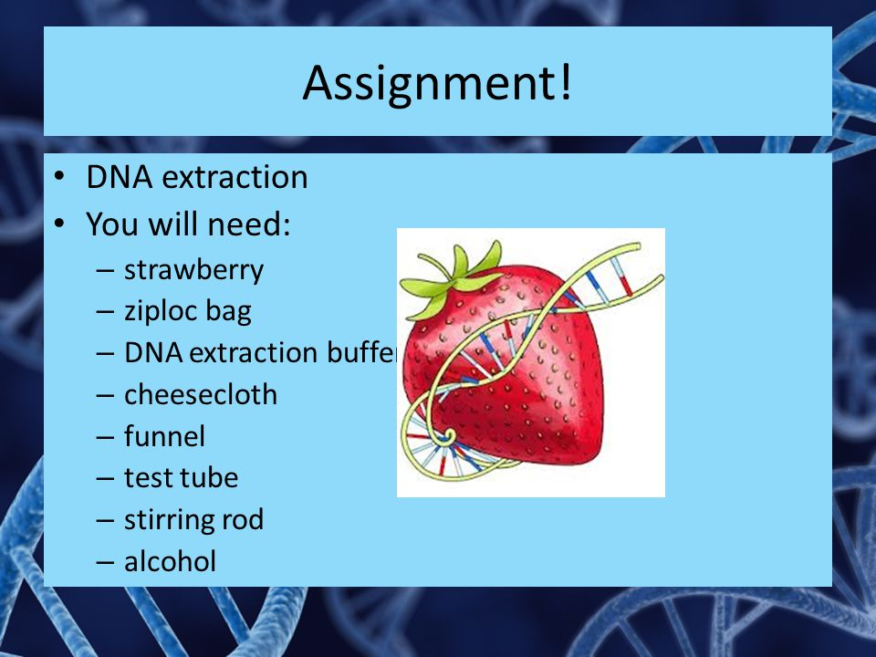 Assignment! DNA extraction You will need: strawberry ziploc bag
