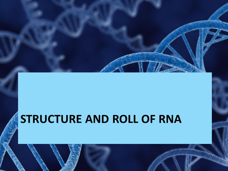 Structure and Roll of RNA