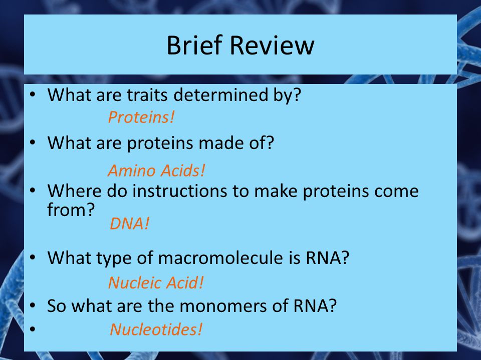 Brief Review What are traits determined by What are proteins made of
