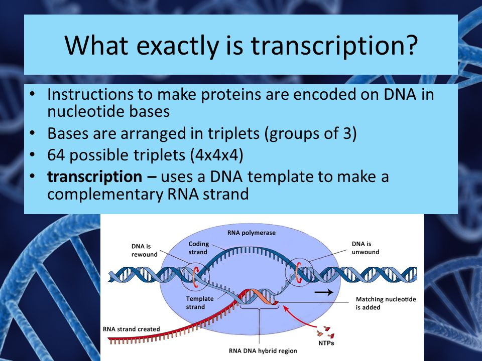 What exactly is transcription