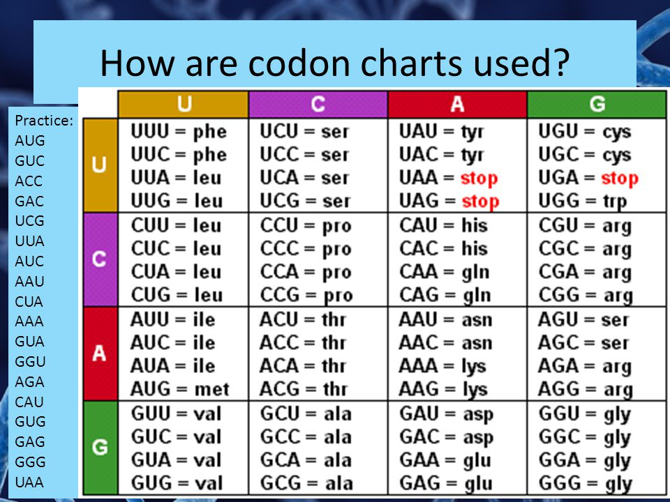 How are codon charts used