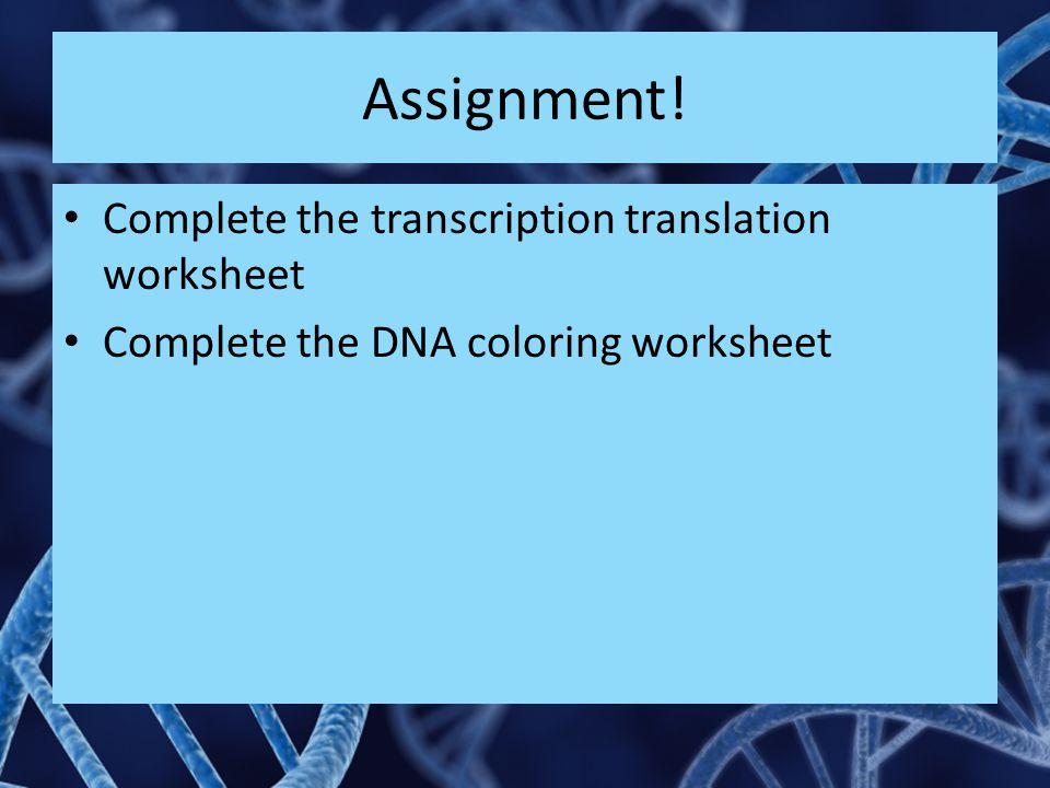 Assignment! Complete the transcription translation worksheet