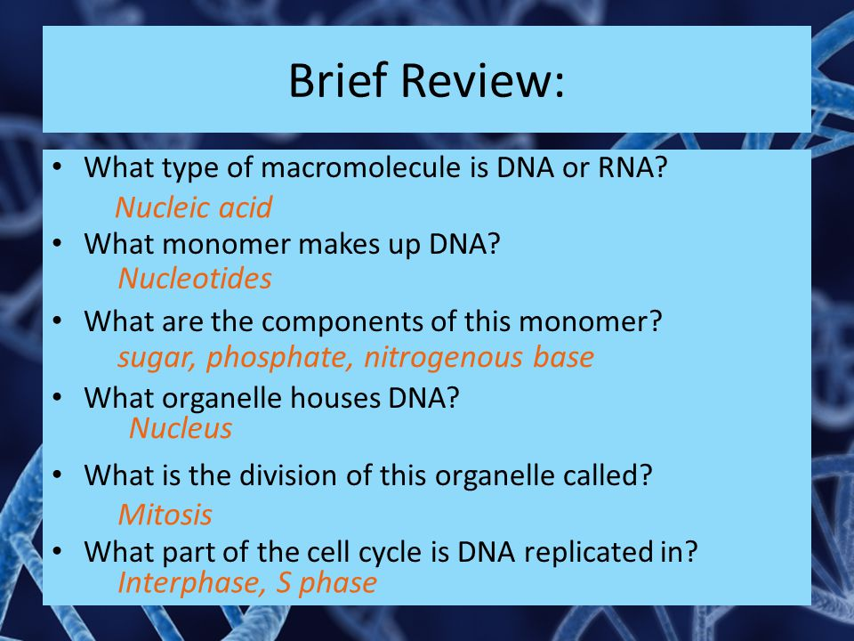 Brief Review: Nucleic acid Nucleotides