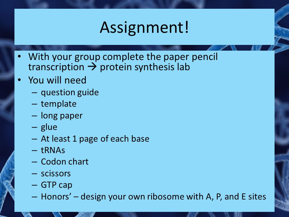 Assignment! With your group complete the paper pencil transcription  protein synthesis lab. You will need.