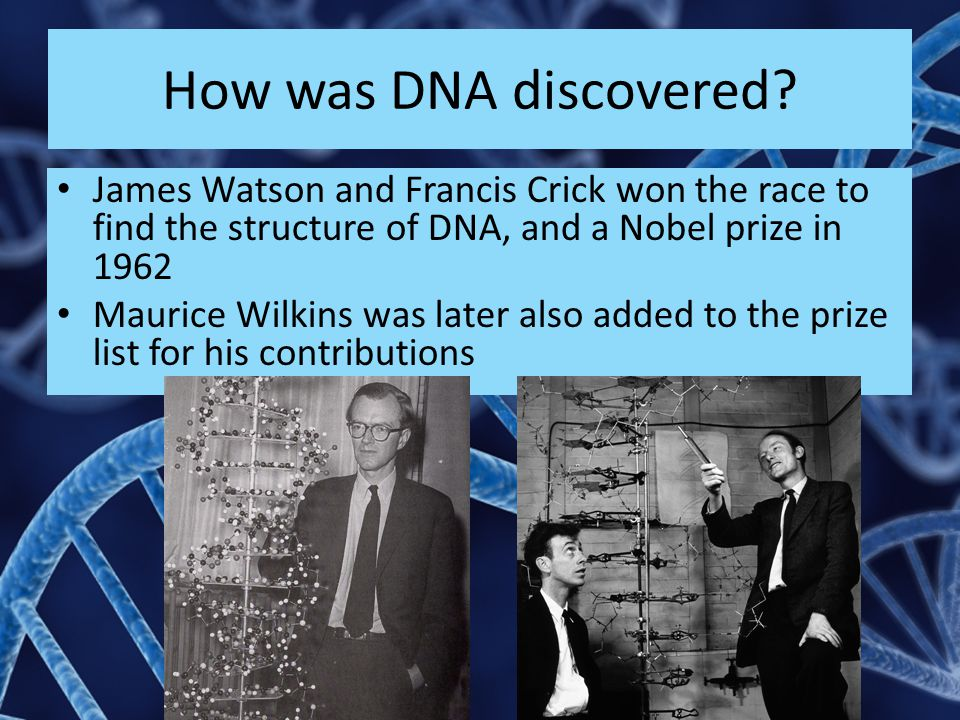 How was DNA discovered James Watson and Francis Crick won the race to find the structure of DNA, and a Nobel prize in 1962.