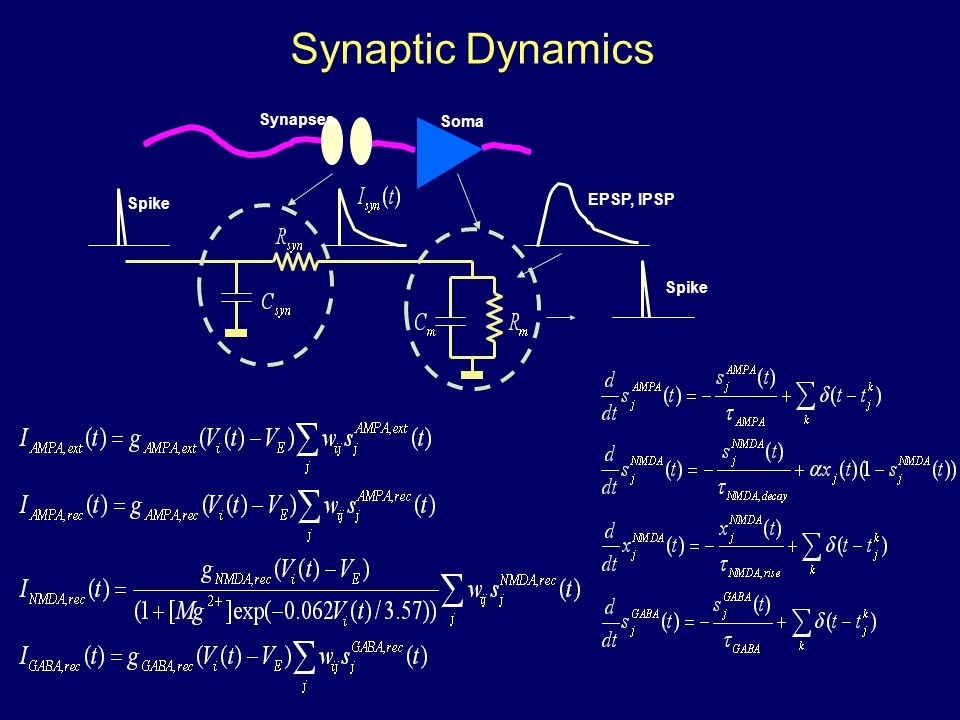 Synaptic Dynamics EPSP, IPSP Spike Soma Synapses