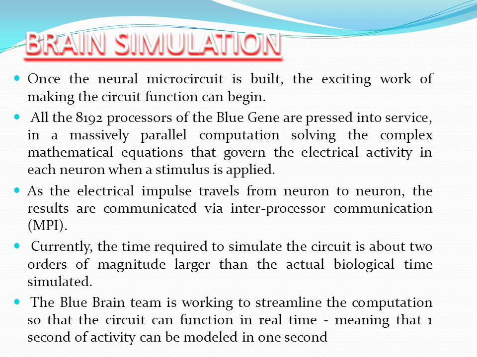 BRAIN SIMULATION Once the neural microcircuit is built, the exciting work of making the circuit function can begin.