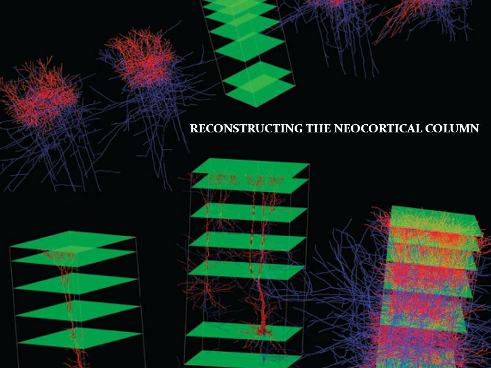 RECONSTRUCTING THE NEOCORTICAL COLUMN