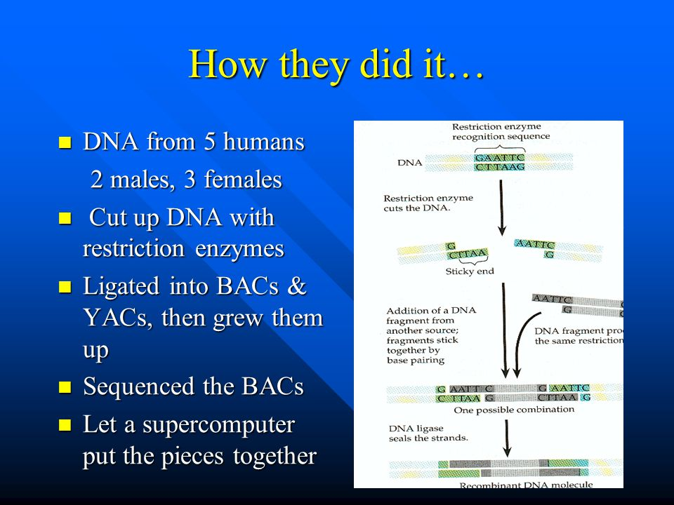 How they did it… DNA from 5 humans 2 males, 3 females