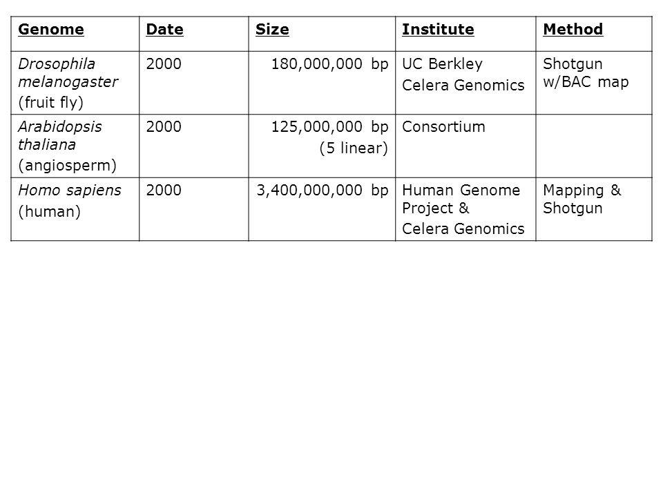Genome Date. Size. Institute. Method. Drosophila melanogaster. (fruit fly) 2000. 180,000,000 bp.