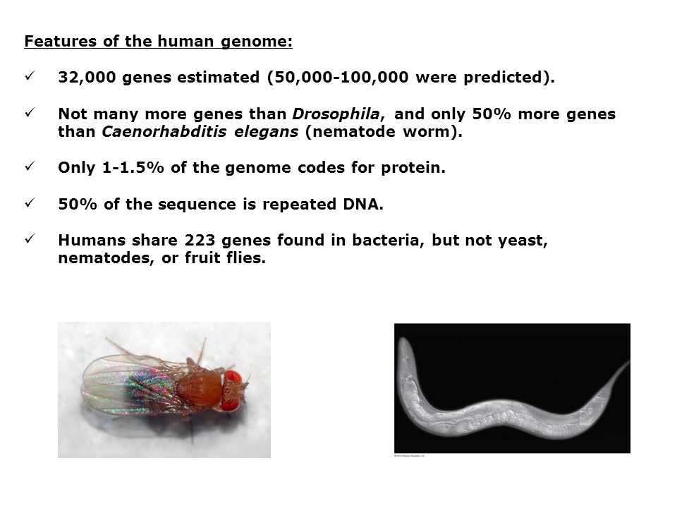 Features of the human genome: