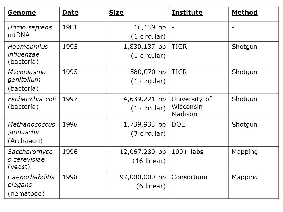 Genome Date. Size. Institute. Method. Homo sapiens mtDNA. 1981. 16,159 bp. (1 circular) - Haemophilus influenzae (bacteria)