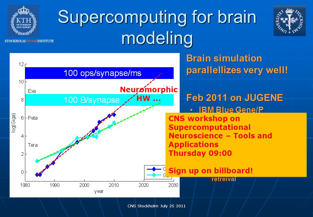 Supercomputing for brain modeling