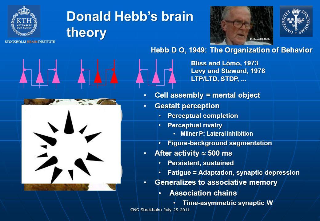 Donald Hebb's brain theory
