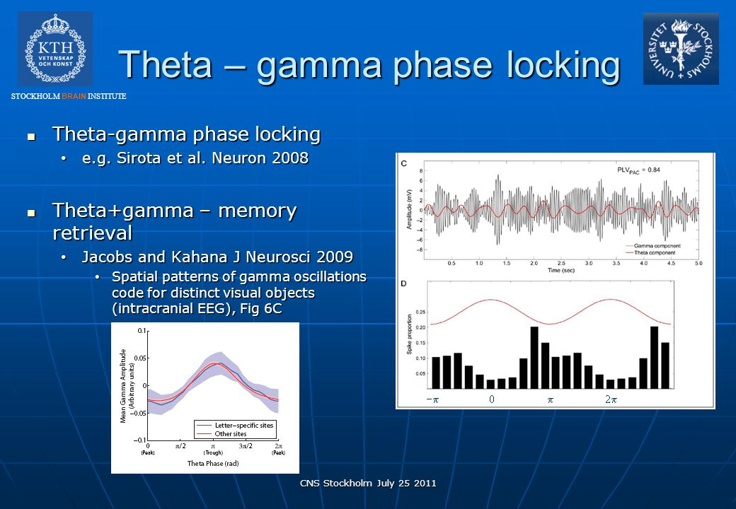 Theta – gamma phase locking