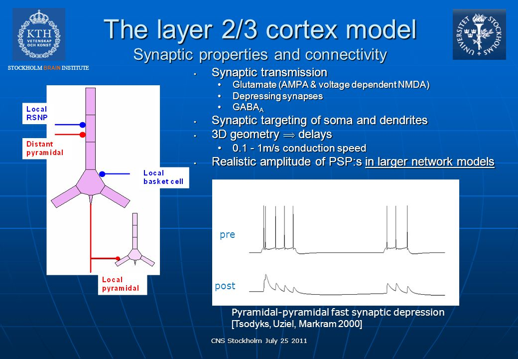 The layer 2/3 cortex model Synaptic properties and connectivity
