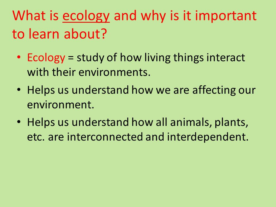 What is ecology and why is it important to learn about