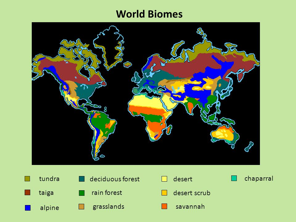 World Biomes tundra deciduous forest desert chaparral taiga