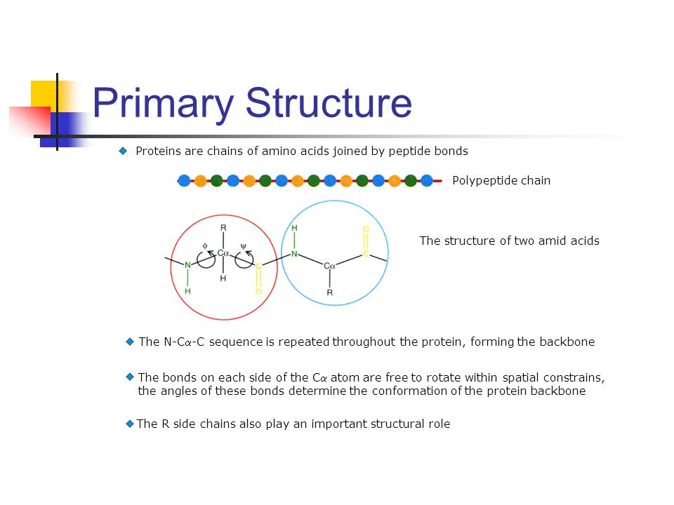 Primary Structure Proteins are chains of amino acids joined by peptide bonds. Polypeptide chain. The structure of two amid acids.