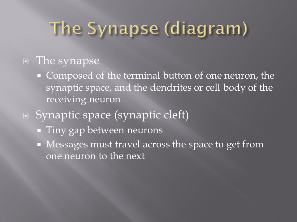 The Synapse (diagram) The synapse Synaptic space (synaptic cleft)