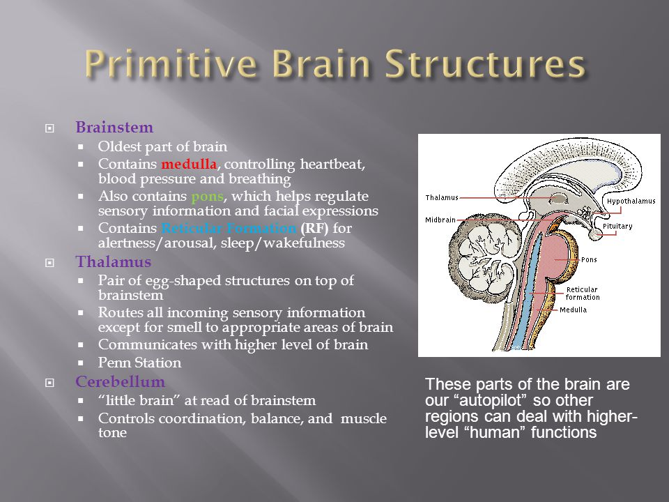 Primitive Brain Structures