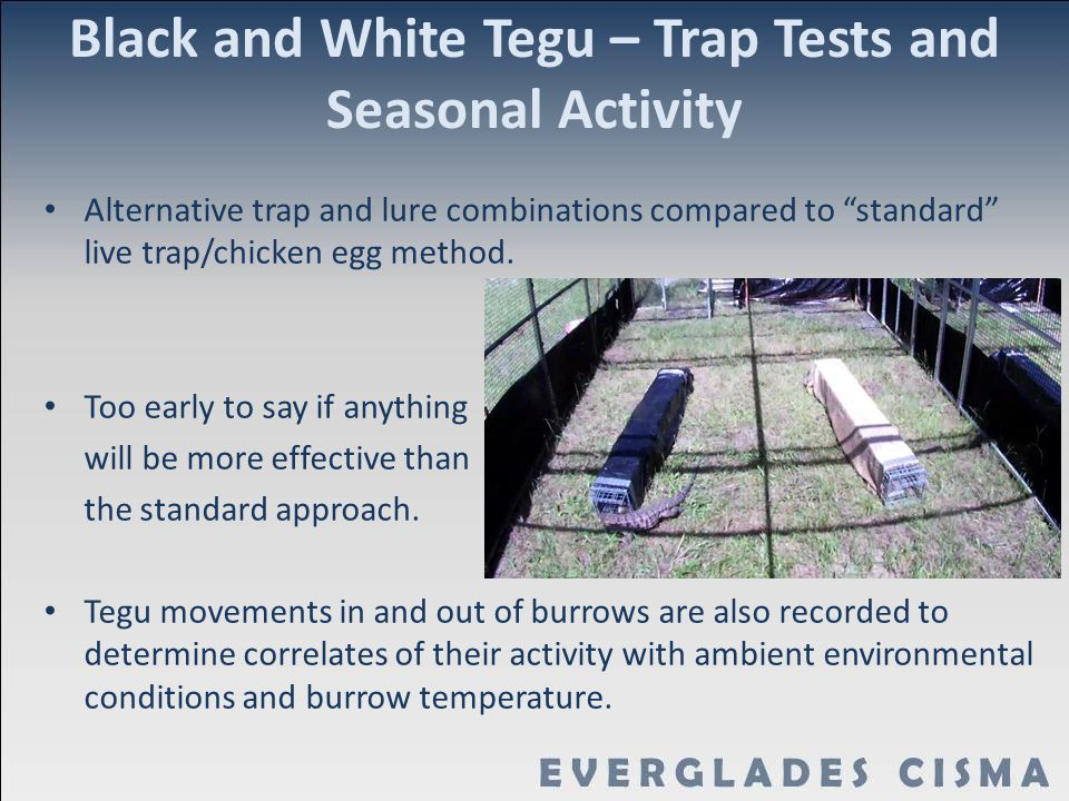 Black and White Tegu – Trap Tests and Seasonal Activity
