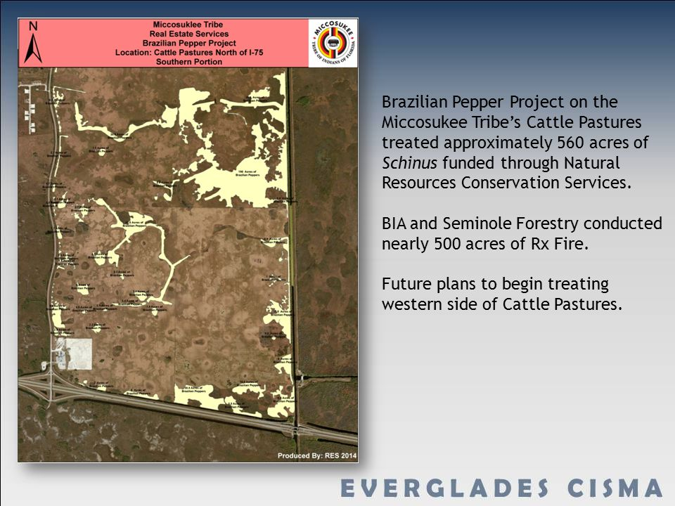 Brazilian Pepper Project on the Miccosukee Tribe's Cattle Pastures treated approximately 560 acres of Schinus funded through Natural Resources Conservation Services.