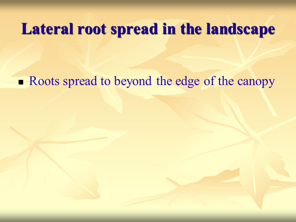 Lateral root spread in the landscape