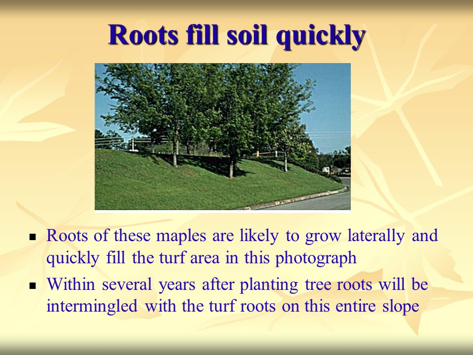 Roots fill soil quickly